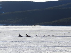 2549481-dog-sledding-on-frozen-lake